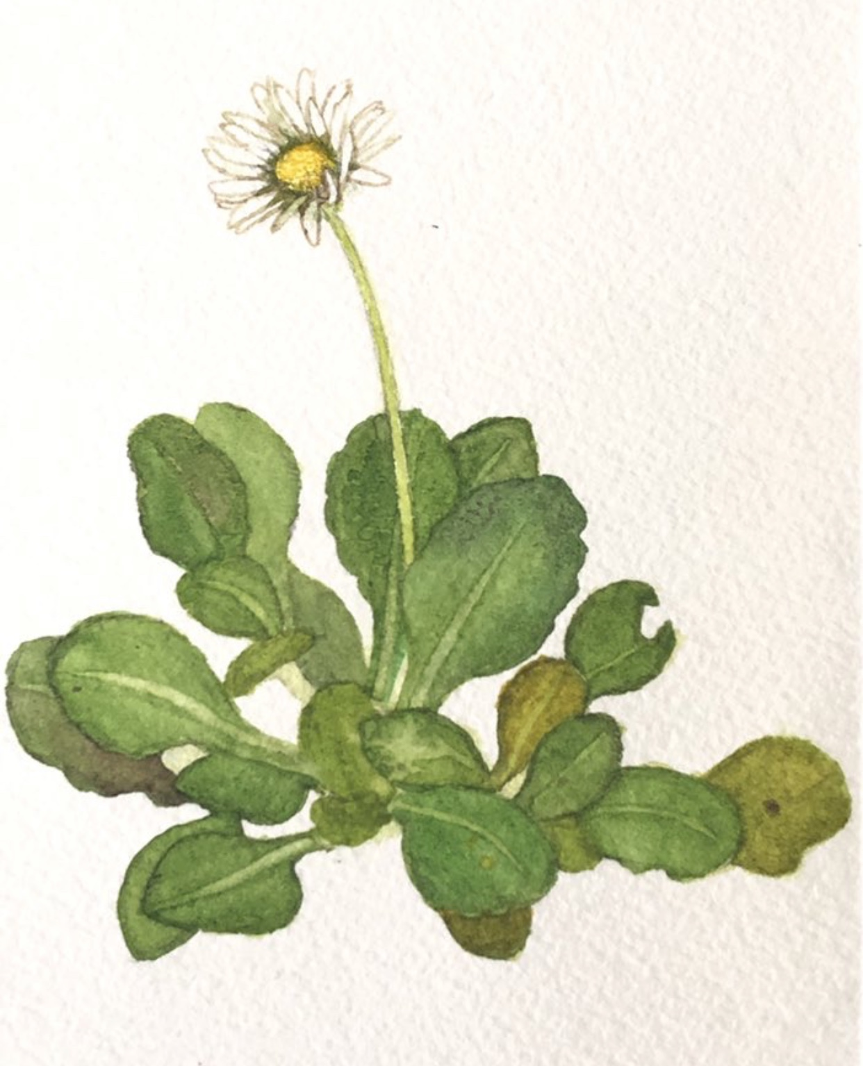 Daisy – Cohort 4 – Our floral emblem; the connection